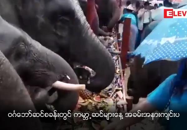 World Elephant Day celebrated at Win Ka Baw elephant camp